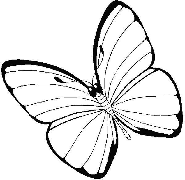 Kolorowanki - Photo de libellule a imprimer ...